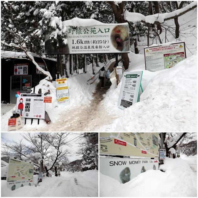 nagano-snow-monkey