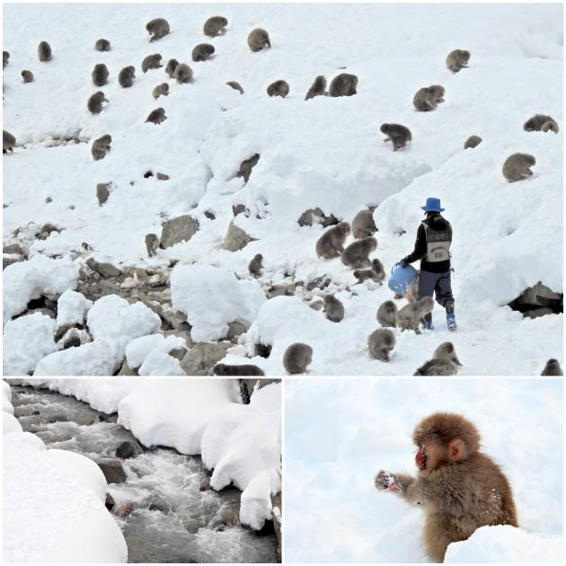 nagano-snow-monkey10