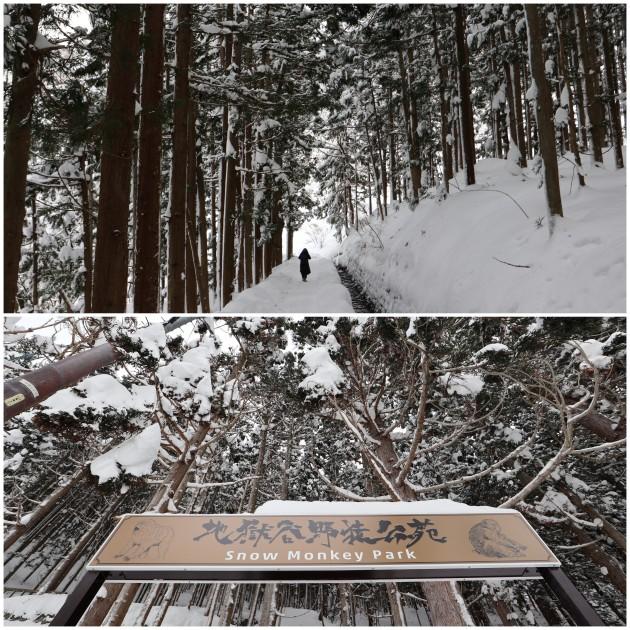 nagano-snow-monkey3