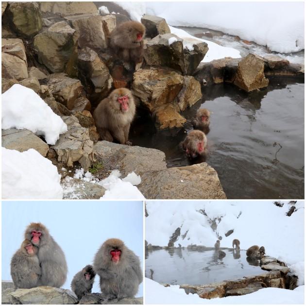 nagano-snow-monkey5