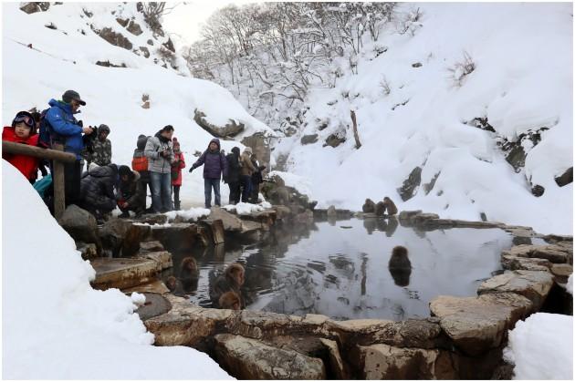 nagano-snow-monkey7
