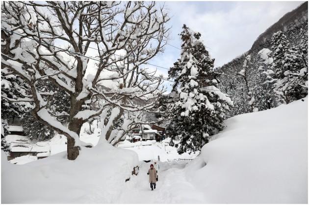 nagano-snow-monkey8